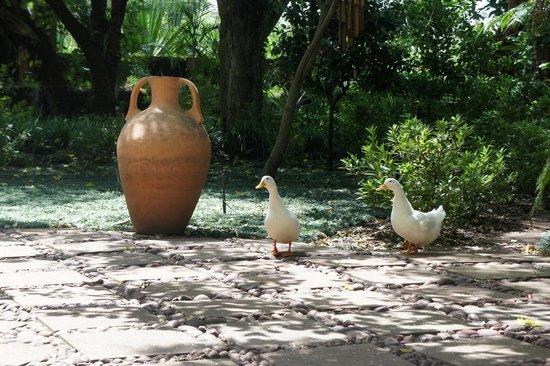 Shangri-La Country Hotel & Spa: 06 Quack and Quack