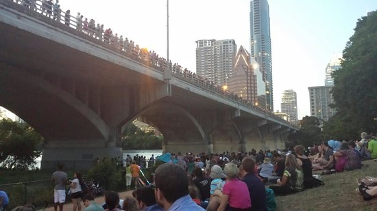 South Congress Avenue: Waiting for the sun to set so the bats will swarm from underneath the bridge.