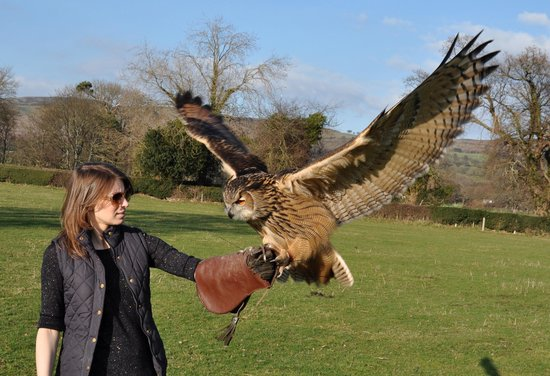 ‪Falconry Experiences‬