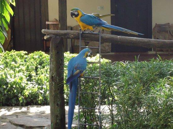 Hotel Parque das Primaveras: Araras Azuis simpáticas