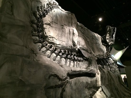 Jurassic Inn by Canalta Hotels : Black Beauty at Royal Tyrrel