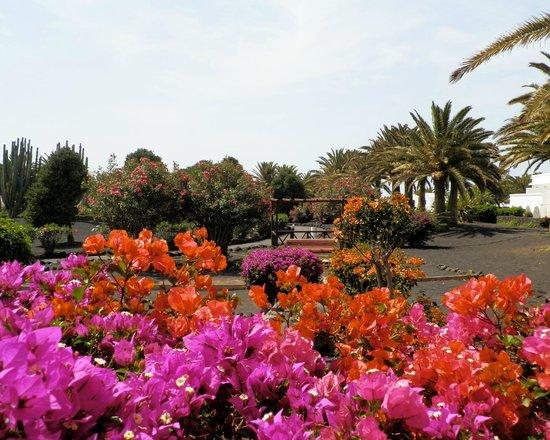 Ole Olivina Lanzarote: Gardens