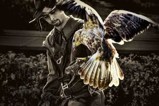 Erlebnisburg Hohenwerfen: Hawk-eye