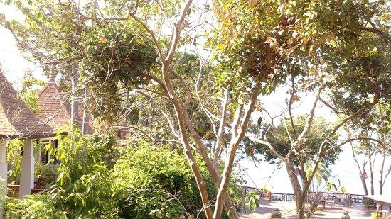Crown Lanta Resort & Spa : Hotel & grounds