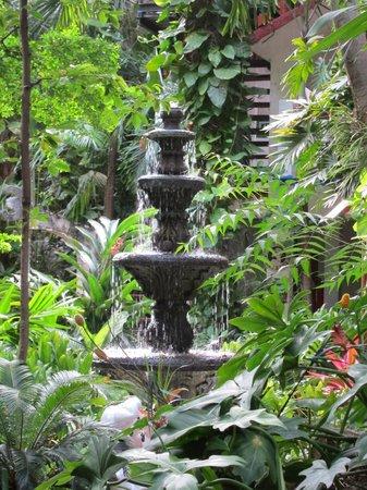 Eco-Hotel El Rey Del Caribe: Garden
