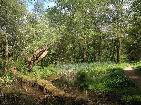 Acorn Bank: In the woods