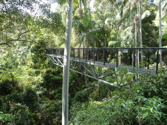 Tamborine Rainforest Skywalk: View from skywalk