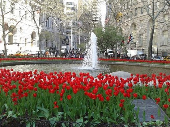 Bowling Green : Tulipanes en primavera