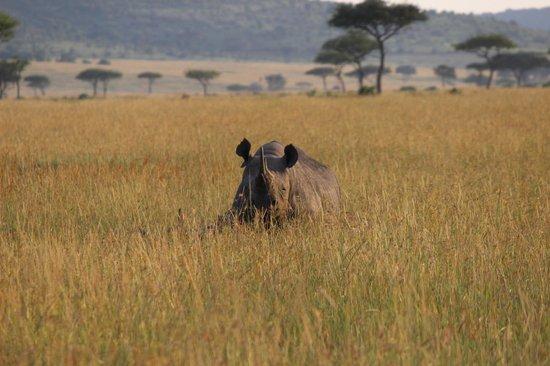andBeyond Kichwa Tembo Tented Camp: black rhino