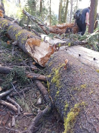 Loch Leven Lakes Trail: Fallen tree making the trail nearly impassable.