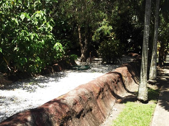 Ashmore Palms Holiday Village : The view of the gardens while walking the rainforest walk