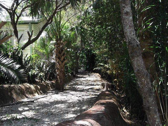 Ashmore Palms Holiday Village : The rainforest walk