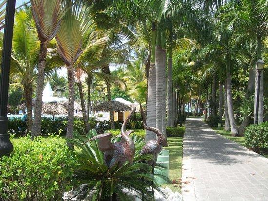 ClubHotel Riu Bachata: autour de l'hôtel