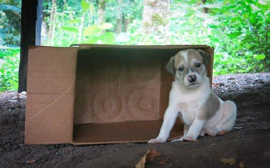 Hospedaje Tipico El Retiro : Puppy!