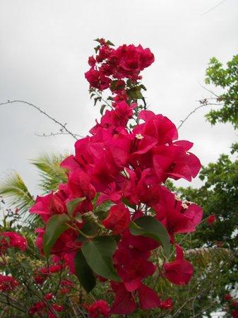 Citronella: Flowers