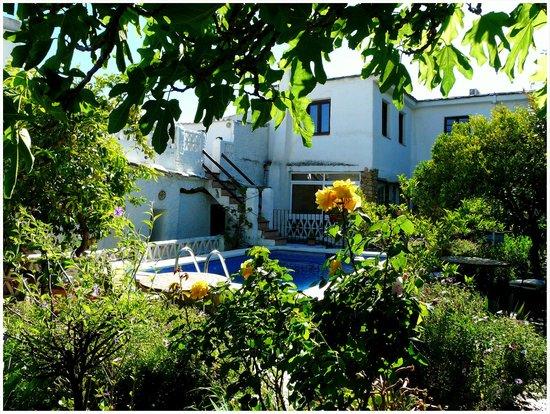 Casa Jazmin : The garden & pool area