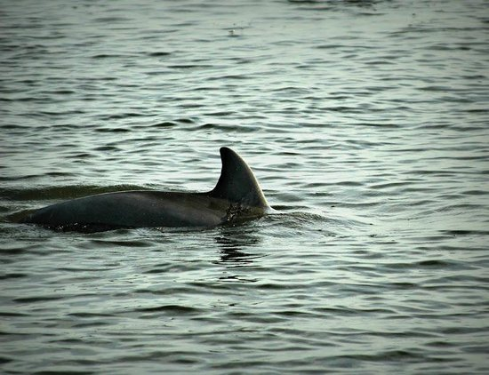 Chincoteague Cruises & Nature Tours : Early morning dolphins with Captain Charlie