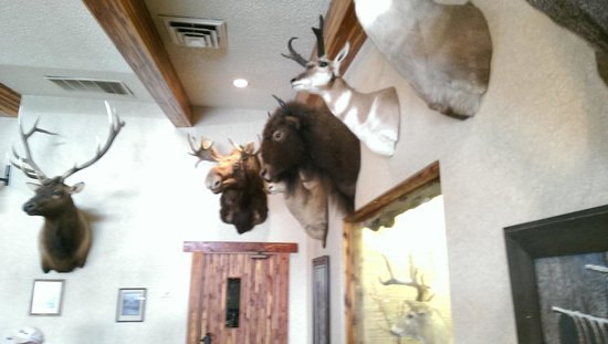 Trappers Inn : The resturant has a lot of cool taxidermy