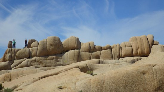 Jumbo Rocks Campground: Some of the jumbo rocks