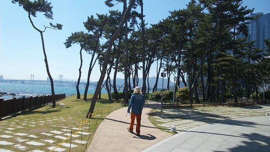 Dongbaekseom Island: park on the island