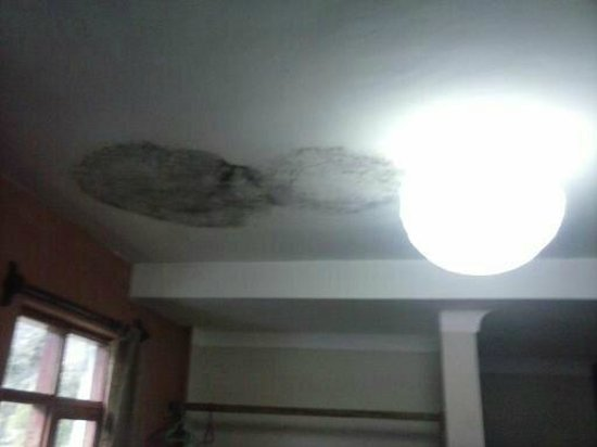 Bed4less: mould on the ceiling of the room