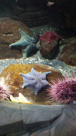 SEA LIFE London Aquarium: Interesting star fish