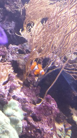 SEA LIFE London Aquarium: Nemoooo
