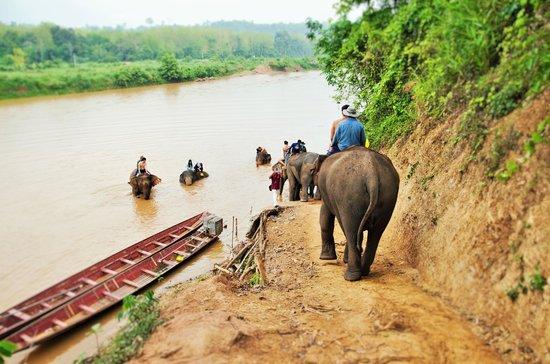 Elephant Village Sanctuary Day Trips : The washing of the elephants