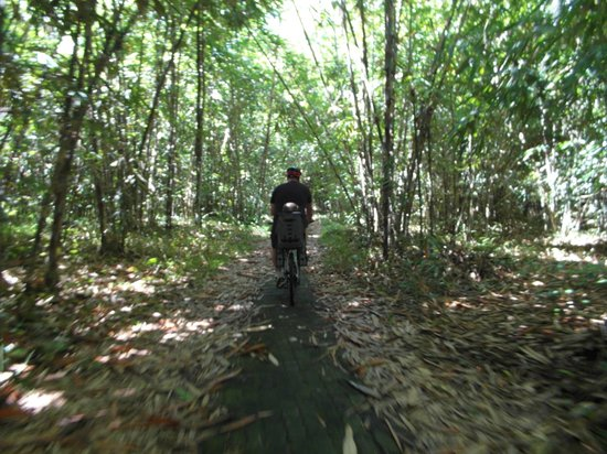 Bali Hai Bike Tours: Through the bamboo forrest