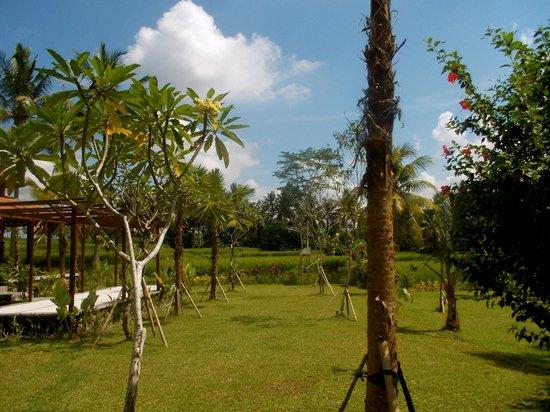 Bhanuswari Resort & Spa: Beautiful property