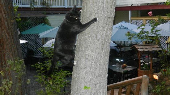 The Groveland Hotel: Momma Cat - welcomes you to the patio