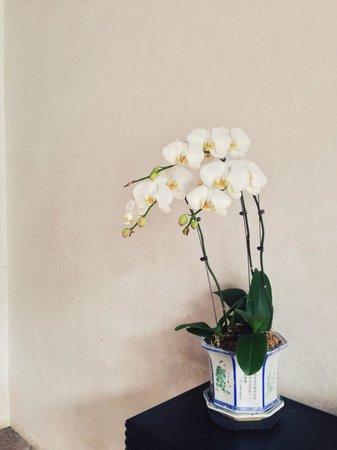 Mandarin's House: одна из множества орхидей
