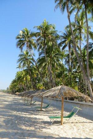 Ngapali Beach : fringed with palm trees