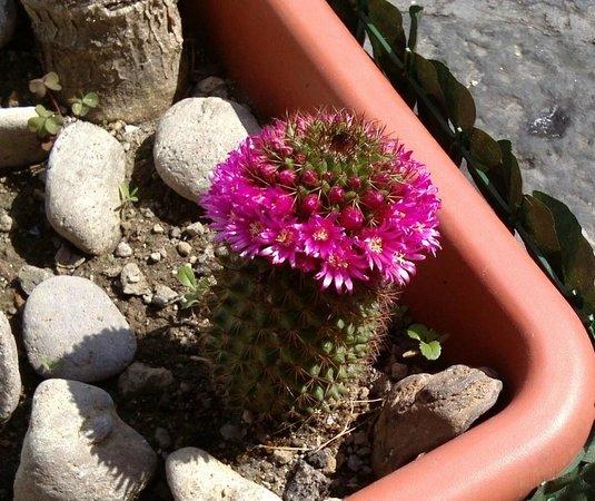 Hotel Parco Cartaromana: fiori nell'atrio