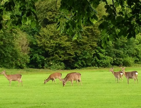 Waterford Castle Hotel & Golf Resort: deer dodging golf balls from the driving range