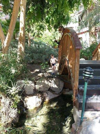The Orchid Hotel and Resort Eilat : Отель и местность