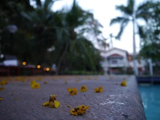 The Gateway Hotel Pasumalai Madurai : garden/swimmingpool