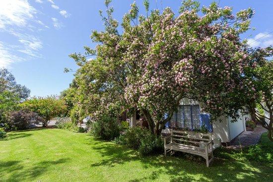 Cornerway House: Pom Pom Tree in bloom