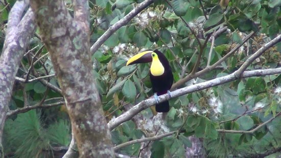 Arenal Observatory Lodge & Spa: Beautiful birds