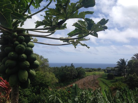 Maui Ocean Breezes: Fruit trees & ocean view