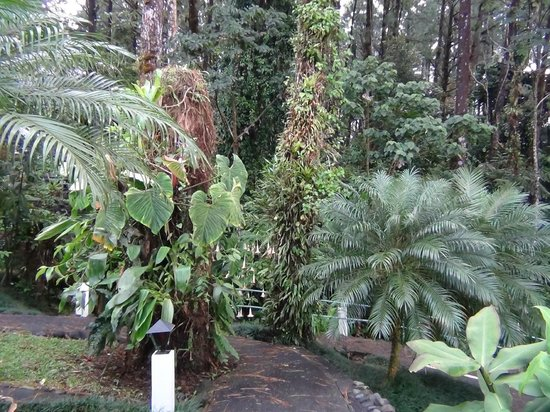 Arenal Observatory Lodge & Spa: Forest surrounding the unit