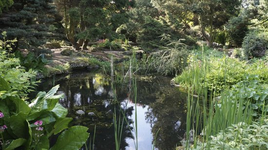 Goddards House and Garden: Pond in the garden.