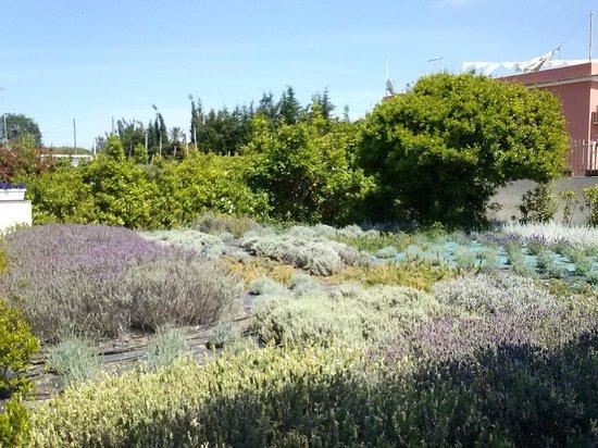 Hotel & Spa La Suite: Il piccolo orto di erbe aromatiche