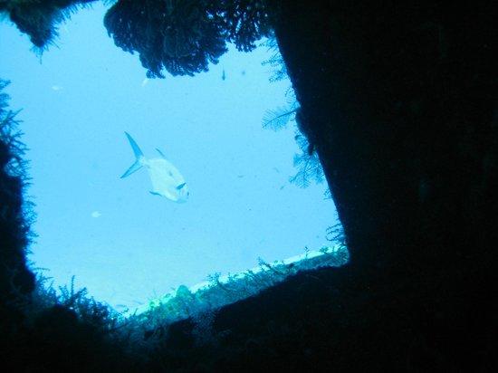 ScubaCaribe: inside wreck