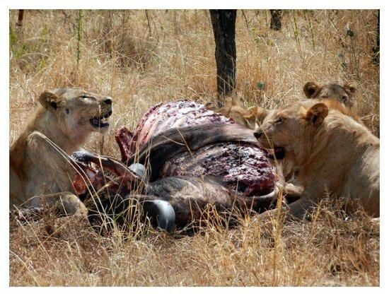 Duma Explorer - Day Tours : Serengeti Buffet - safari with Duma Explorer