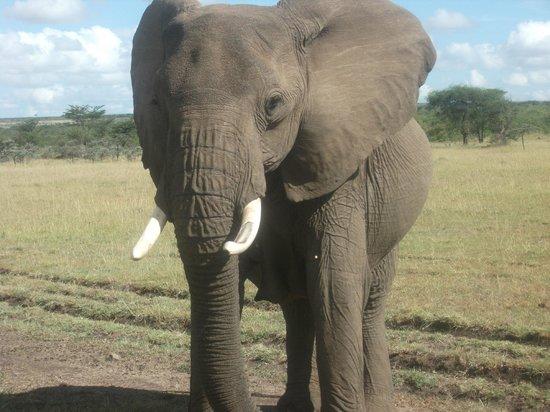 Encounter Mara, Asilia Africa: elephant