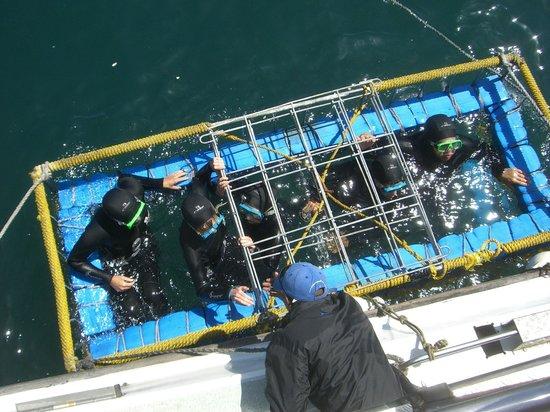 Radisson Blu Hotel Waterfront, Cape Town: Lo squalo dalla gabbia