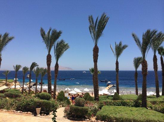 Four Seasons Resort Sharm El Sheikh: From the pool