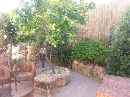 B&B Sa Bertula: Giardino