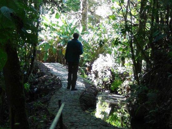 Savegre Hotel, Natural Reserve & Spa : Forest walk